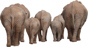 Elephants in the room...